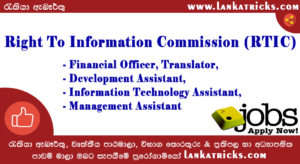 Financial Officer, Translator, Development Assistant, Information Technology Assistant, Management Assistant