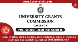 Audit Assistant - UGC